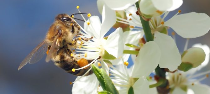 UPDATE! Stand van zaken bloembollen sponsoractie wilde bijen