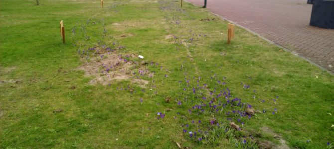 De lente is begonnen: het bijenbloembollen spoor komt op!